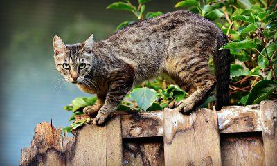 AionSur gatos-400x240 Condenada por abandonar en una colonia los gatos que tenía en su casa Sucesos
