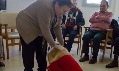 AionSur Arahal-animales-terapia-400x240 Terapia asistida con animales, una nueva forma de ser solidarios Arahal Sociedad  destacado