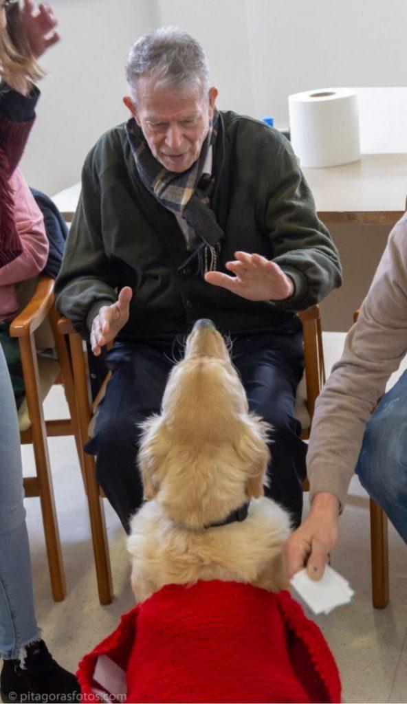 AionSur Arahal-terapia-animales-592x1024 Terapia asistida con animales, una nueva forma de ser solidarios Arahal Sociedad  destacado
