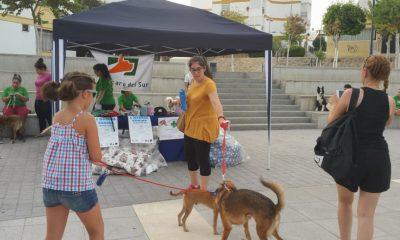 AionSur ElAmparo-SanAntón-400x240 El Amparo del Sur organiza una bendición de mascotas para celebrar San Antón Sociedad