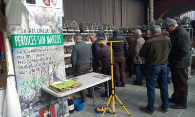 AionSur rodacaza4-400x240 Más de 10.000 visitas a la Feria de la Caza y la Perdiz de La Roda La Roda de Andalucía Sociedad