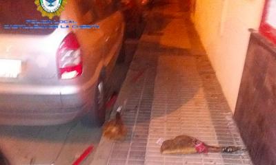 AionSur CastillejaJamones1-400x240 Siguen un rastro de jamones hasta llegar al ladrón de una carnicería Aljarafe Sucesos  destacado