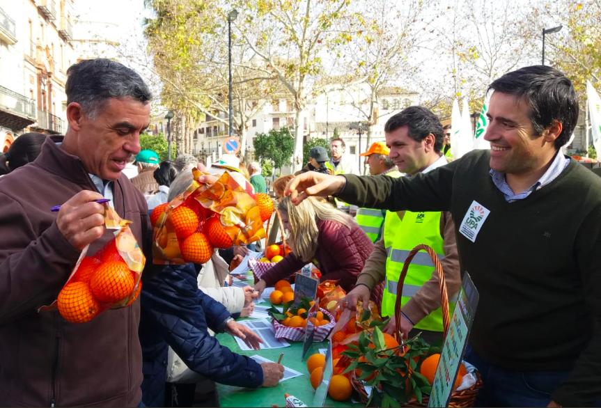 AionSur Naranjas-UPA Reparten 2.000 kilos de naranjas para protestar por su bajo precio Agricultura Sevilla