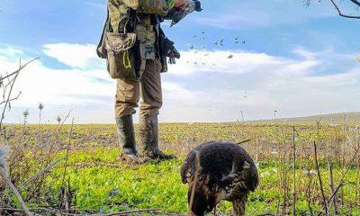 AionSur caza-Andalucía-moción-400x240 Los cazadores toman la palabra Sociedad  destacado