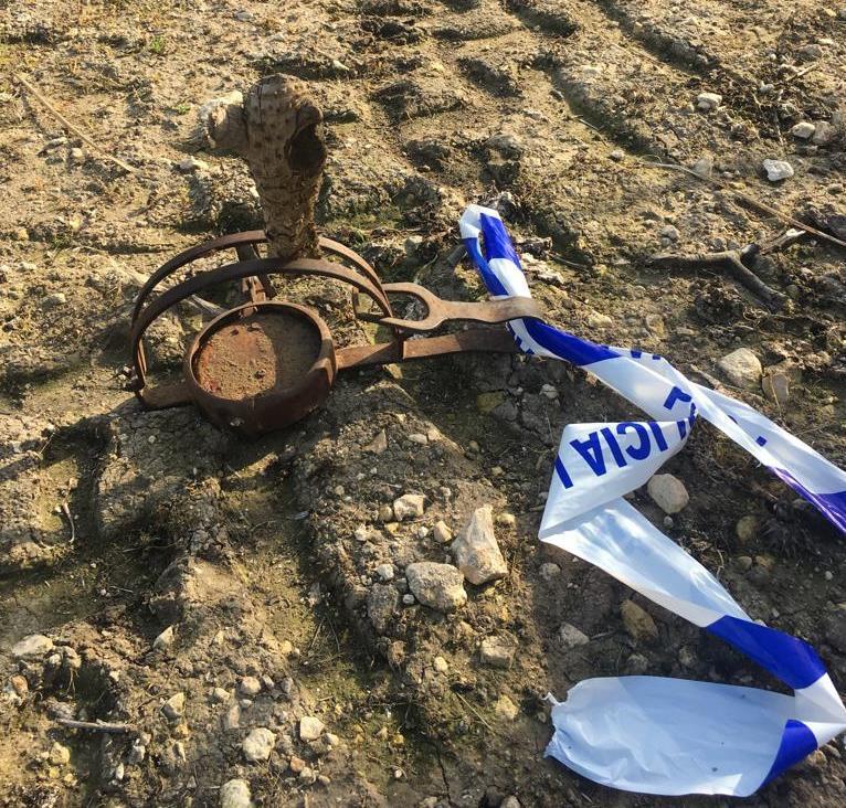 AionSur cepo-arahal-perro El perro atrapado por un cepo en Arahal tiene el cuerpo lleno de plomos Sucesos  destacado