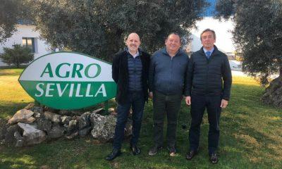 AionSur roda-aceituna-400x240 La Roda lleva a la UE un informe que defiende la importancia del olivar en Andalucía Agricultura La Roda de Andalucía