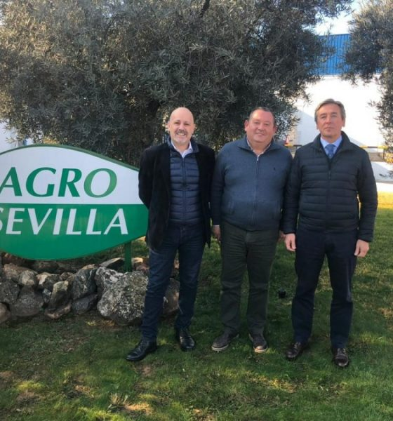 AionSur roda-aceituna-560x600 La Roda lleva a la UE un informe que defiende la importancia del olivar en Andalucía Agricultura La Roda de Andalucía