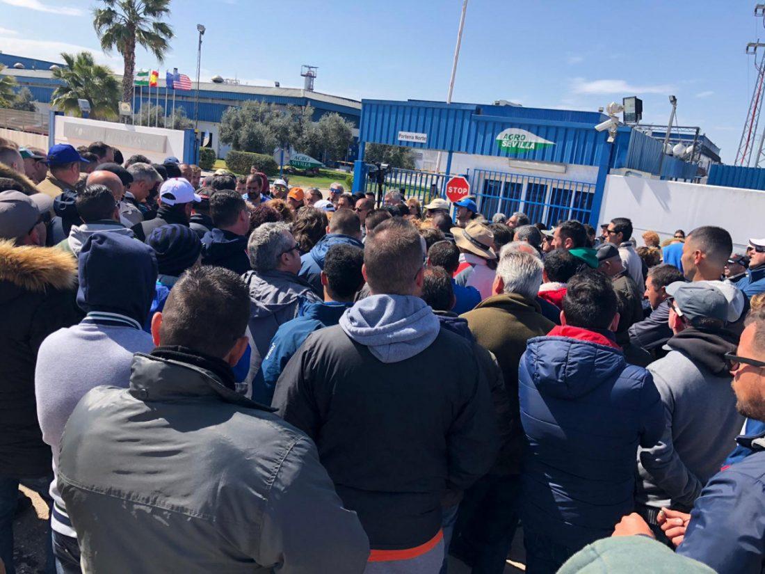 AionSur Aderezo El PSOE pide a las empresas aceituneras que escuchen a sus trabajadores en huelga Agricultura La Roda de Andalucía  destacado