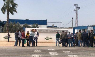 AionSur AderezoRODA-400x240 Unos 7.000 aderezadores de aceituna, en huelga para pedir un convenio digno Agricultura Empresas destacado