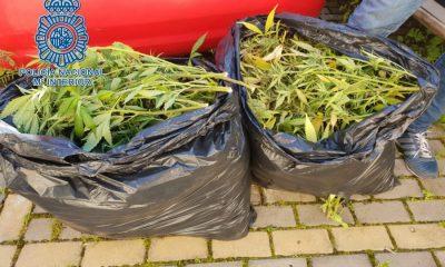 AionSur MARIHUANA-DOS-HERMANAS-400x240 Lo sorprende la Policía por la calle con dos bolsas de basura llenas de marihuana