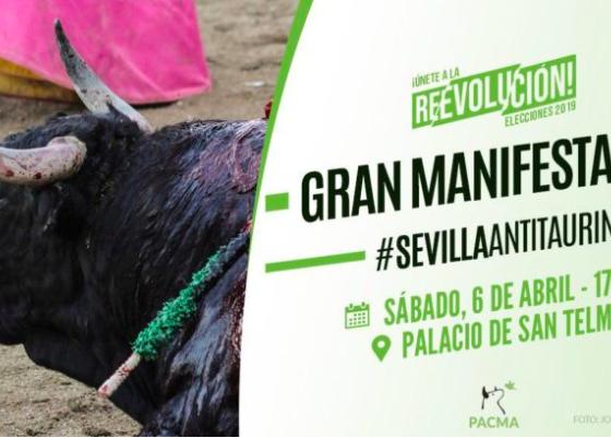 AionSur PACMA-manifa-560x401 Convocan en Sevilla una gran manifestación antitaurina para el 6 de abril Sevilla Toros