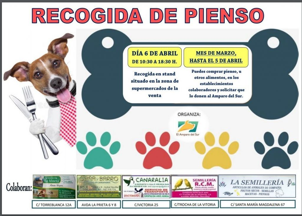 AionSur amparo-campaña-perros-1024x732 ¿Por qué es gratificante ser casa de acogida para animales abandonados? Sociedad destacado