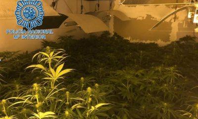 AionSur droga-Tresmilviviendas-400x240 Detenido un clan familiar en las Tres Mil Viviendas dedicado al tráfico de drogas Sucesos