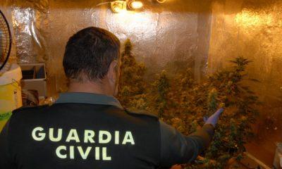 AionSur droga-detención-guardia-civil-400x240 Detenida una pareja en La Puebla de Los Infantes que tenía una plantación de marihuana en su casa Sucesos