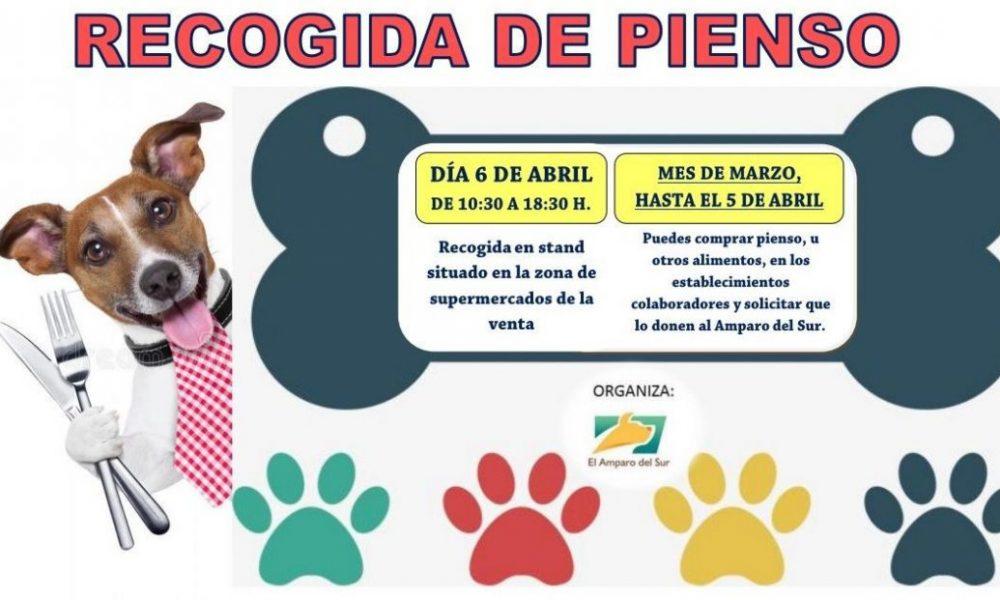 AionSur el-amparo-Arahal-1000x600 ¿Por qué es gratificante ser casa de acogida para animales abandonados? Sociedad  destacado