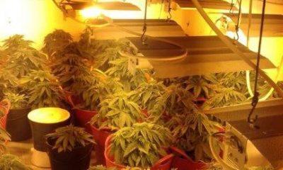 AionSur marihuana-casa-en-construcción-400x240 Desmantelada en Dos Hermanas una plantación de marihuana camuflada en una vivienda en construcción Sucesos
