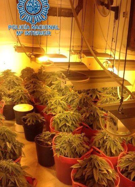 AionSur marihuana-casa-en-construcción-432x600 Siete detenidos en una operación contra el tráfico de marihuana en Carmona Carmona Narcotráfico Sucesos  destacado