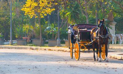 AionSur parque-sevilla-400x240 Los parques de Sevilla, cerrados por el fuerte viento Sevilla Sucesos