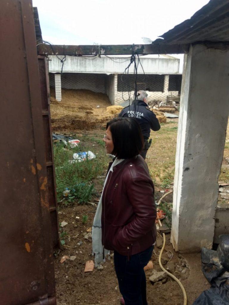 AionSur alcaldesa-Marchena-finca-abandonada-769x1024 El Ayuntamiento de Marchena se hace cargo de 150 animales abandonados por la detención del dueño de la finca Marchena Sucesos  destacado