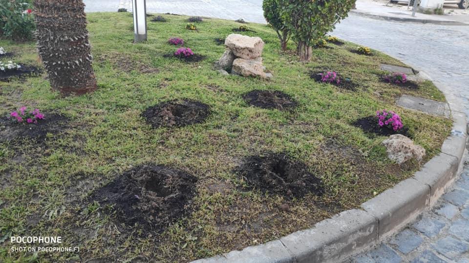 AionSur plantas Identificado un vecino de Marchena tras varios robos de plantas en zonas públicas Marchena Sucesos  destacado