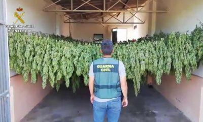 AionSur Lebrija-droga-El-Cuervo-400x240 Dos detenidos por cultivar de 1.200 plantas de marihuana en un invernadero de El Cuervo Sucesos