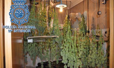 AionSur marihuana-dos-hermanas-400x240 Desmantelada una plantación de marihuana en una casa de Dos Hermanas Dos Hermanas Sucesos