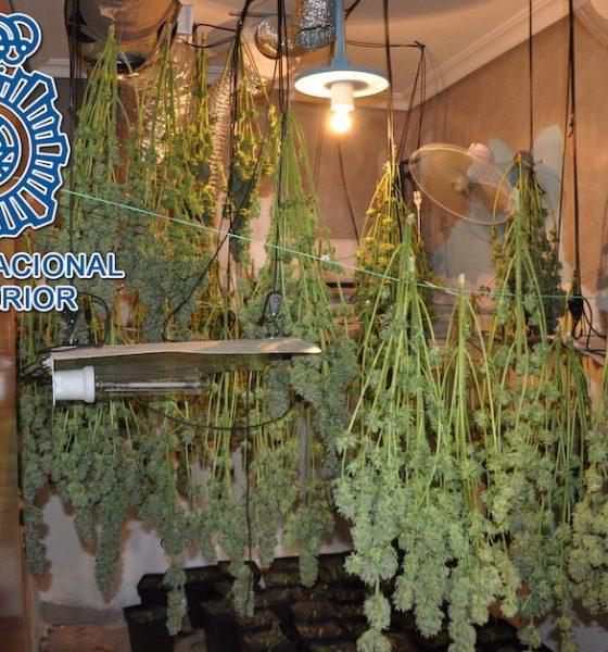 AionSur marihuana-dos-hermanas-560x600 Desmantelada una plantación de marihuana en una casa de Dos Hermanas Dos Hermanas Sucesos