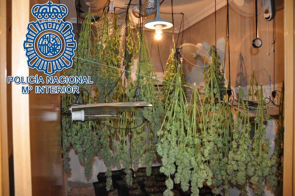 AionSur marihuana-dos-hermanas Desmantelada una plantación de marihuana en una casa de Dos Hermanas Dos Hermanas Sucesos