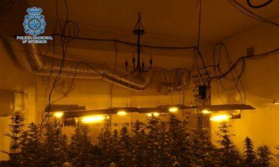 AionSur policía-marihuana-Alcalá-400x240 Un detenido y dos plantaciones de marihuana desmanteladas en dos viviendas en Alcalá de Guadaíra Sucesos