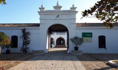 AionSur Veranillos-del-Alamillo2-400x240 Los Veranillos del Alamillo llenarán el parque de magia, música, cine y flamenco Cultura Sevilla