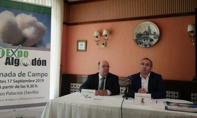 AionSur expoalgodon-400x240 Los Palacios será sede de la VI edición de Expoalgodón Agricultura Provincia