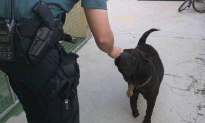 AionSur rescate-animal-abandonado-Utrera-400x240 Rescatan a un perro amarrado al sol, sin agua y con fuertes síntomas de deshidratación Sucesos Utrera  destacado