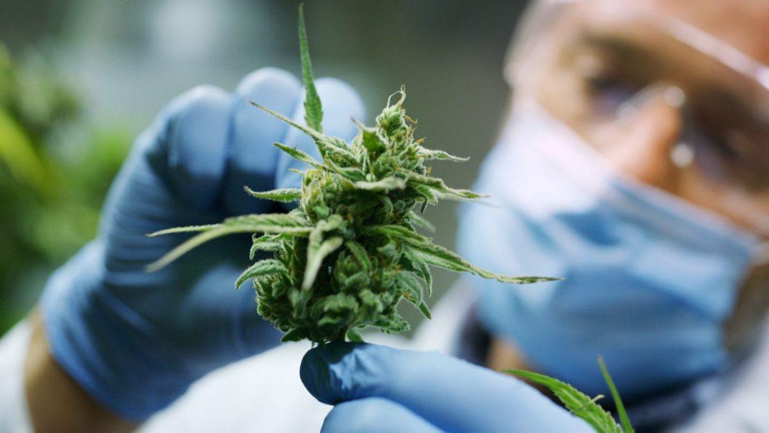 AionSur Cannabis-Marihuana Sevilla producirá marihuana legal en 2020 Andalucía Salud