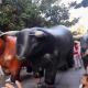 """AionSur Gines-encierros-80x80 Gines programa encierros de """"toros"""" en sus feria de San Ginés Provincia Sociedad"""