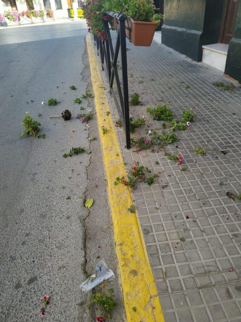 AionSur MACETAS-MADRE-DE-DIOS Un hombre en estado de embriaguez destroza las flores de la zona del bar en Arahal Arahal