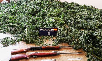 AionSur Marihuana-Moron-400x240 Dos detenidos y desmantelada una plantación de marihuana en Morón de la Frontera Morón de la Frontera Sucesos