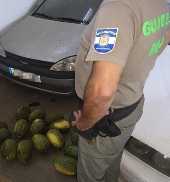AionSur melones-560x600 Detenido un vecino de Dos Hermanas por robo de melones tras una peligrosa persecución Huelva Sucesos