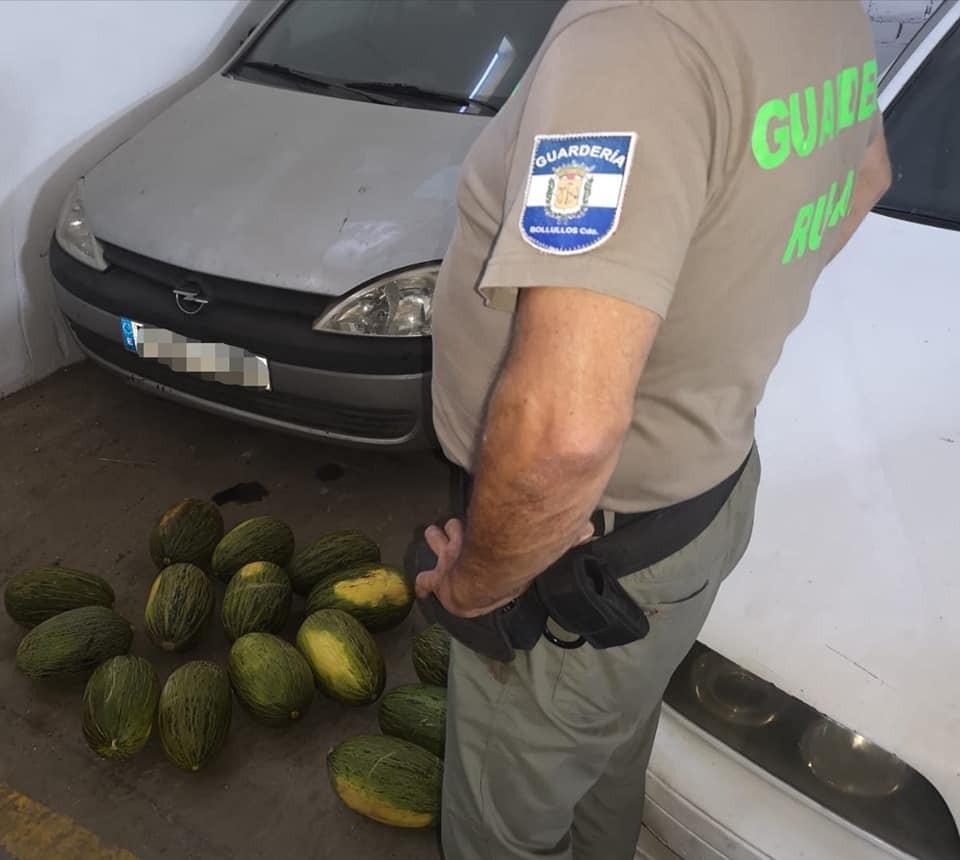 AionSur melones Detenido un vecino de Dos Hermanas por robo de melones tras una peligrosa persecución Huelva Sucesos