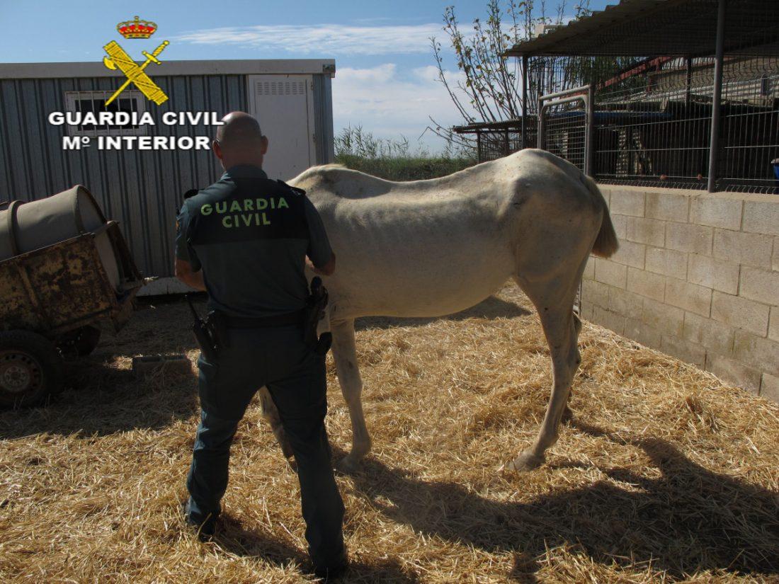 AionSur FOTOGRAFÍA-compressor Investigan a un vecino de Isla Mayor por un delito de maltrato de animales domésticos Sucesos