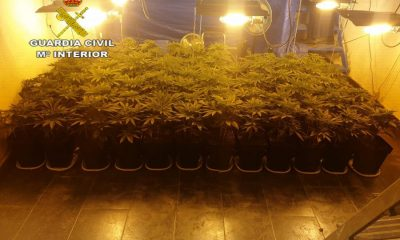 AionSur Marihuana-El-Coronil-400x240 Desmantelada una plantación de marihuana en El Coronil con más de 1.300 plantas El Coronil Narcotráfico Sucesos