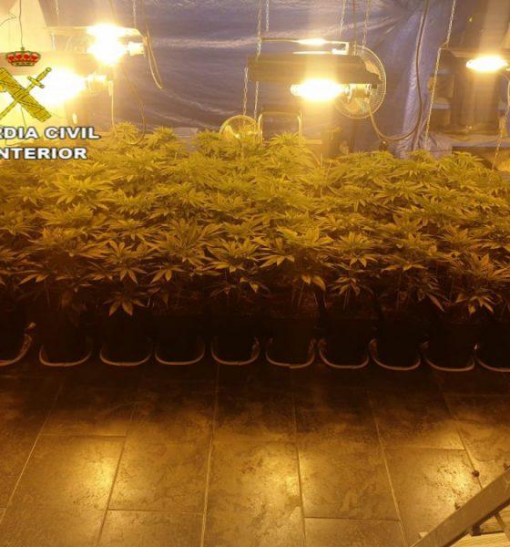 AionSur Marihuana-El-Coronil-560x600 Desmantelada una plantación de marihuana en El Coronil con más de 1.300 plantas El Coronil Narcotráfico Sucesos