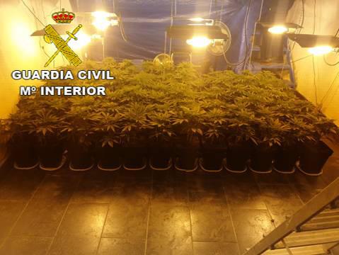 AionSur Marihuana-Osuna Acuden a una llamada por violencia de género en Osuna y descubren una plantación de marihuana Narcotráfico Osuna Sucesos