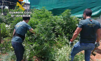 AionSur Marihuana-guardia-civil-400x240 Cinco detenidos y desmantelada una plantación de marihuana en Almensilla Narcotráfico Sucesos
