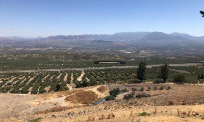 AionSur Olivar-400x240 El paisaje del olivar, camino de ser Patrimonio Mundial Andalucía Sociedad