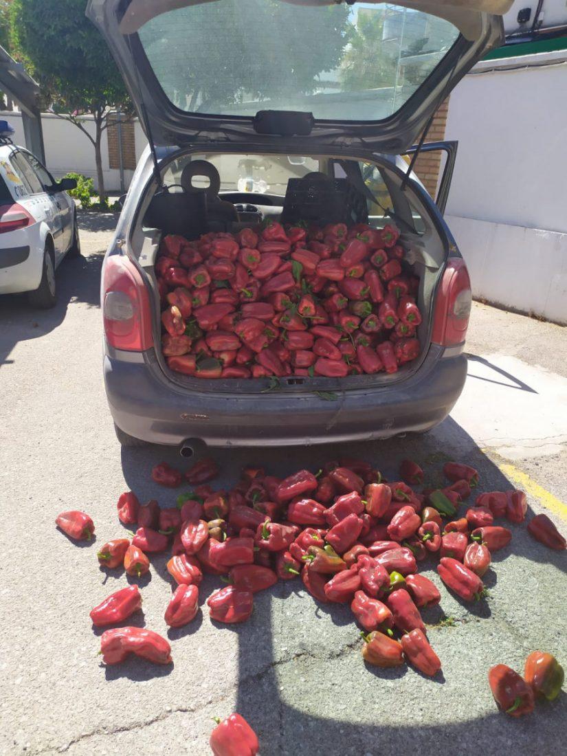 AionSur Utrera-robo Detenido tras robar 200 kilos de pimientos en un campo de Utrera Sucesos Utrera