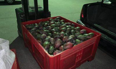 AionSur 68287389-505c-4520-9aad-6f4163cfe6aa-compressor-400x240 Detenidos con 700 kilos de mango robado porque pincharon una rueda en Arahal Arahal Sucesos  destacado