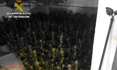 AionSur HUEVAR-MARIHUANA-INDOOR-copia-400x240 Un detenido y desmantelada una plantación de marihuana en Huévar del Aljarafe Narcotráfico Provincia Sucesos