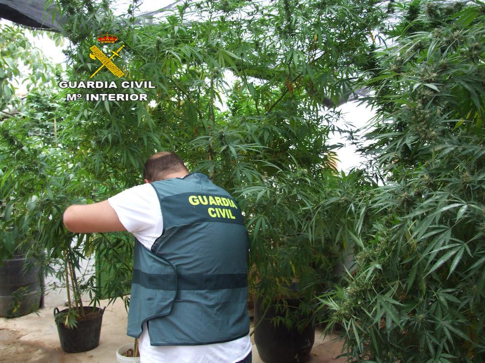 AionSur Marihuana-Herrera Dos detenidos por cultivar marihuana en Herrera Herrera Sucesos