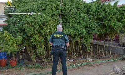 AionSur Marihuana-rinconada-400x240 Cuatro detenidos y desmantelada una plantación de marihuana en La Rinconada Narcotráfico Sucesos