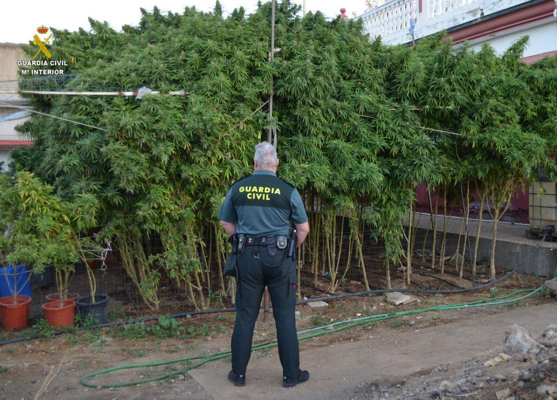 AionSur Marihuana-rinconada Cuatro detenidos y desmantelada una plantación de marihuana en La Rinconada Narcotráfico Sucesos